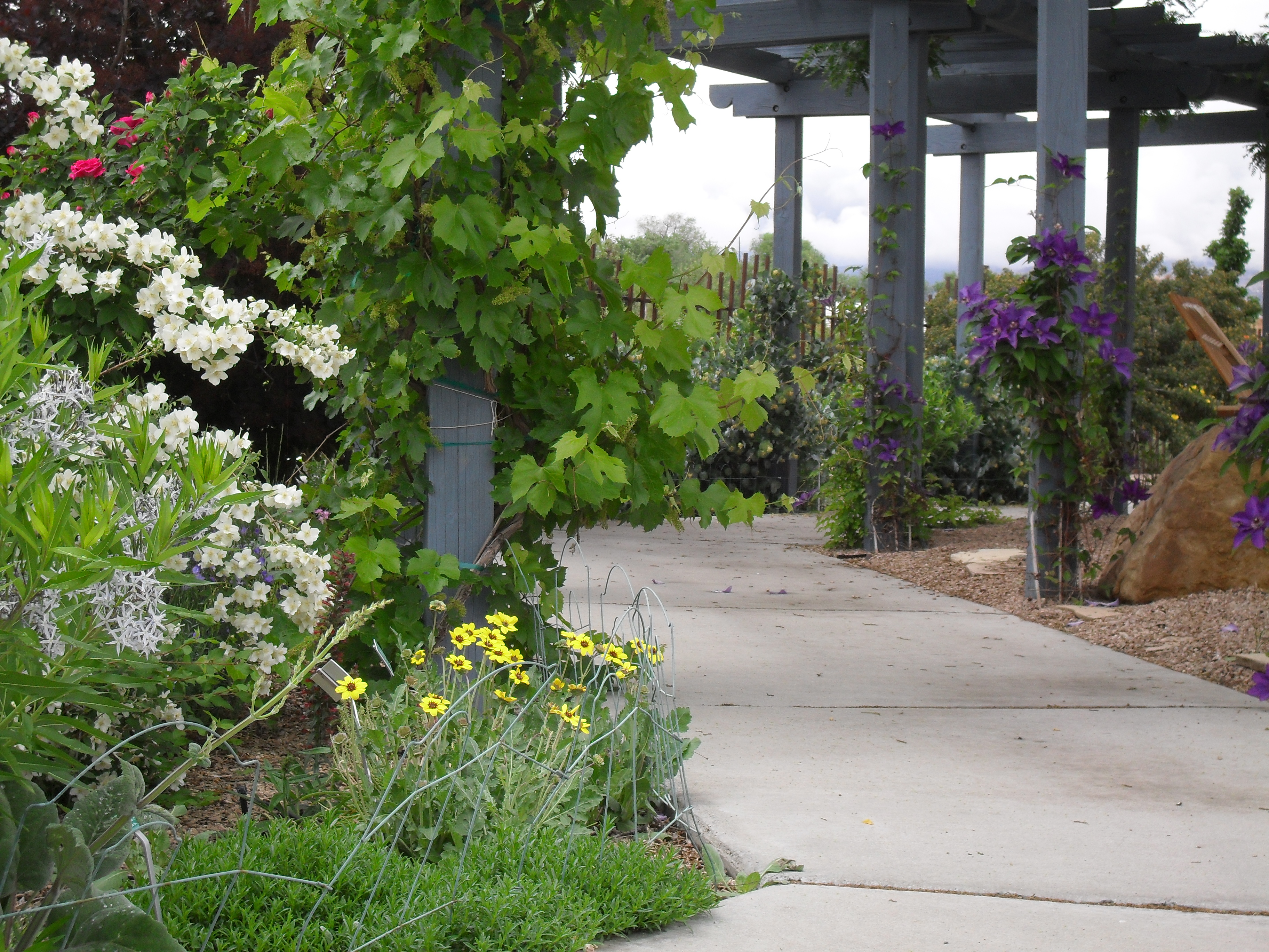 western colorado botanic gardens grand junction plant select